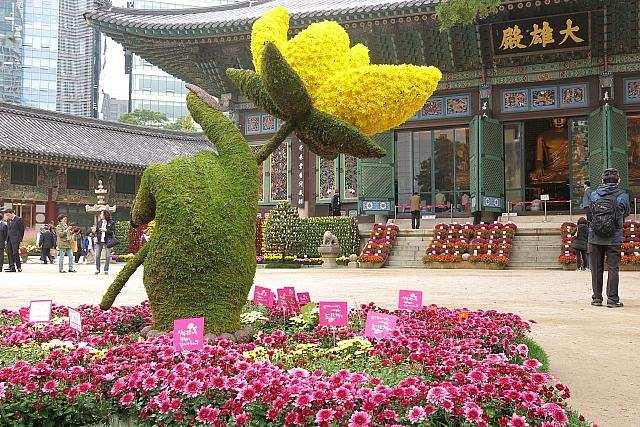 хризантема, япония, цветы, Фишки дня — 9 сентября