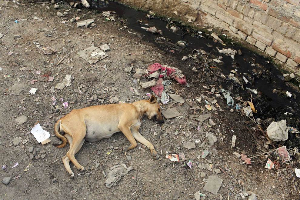A dog lies next to a severely polluted water channel. The water comes from nearby tanneries which release untreated waste water directly into channels that run through local communities.