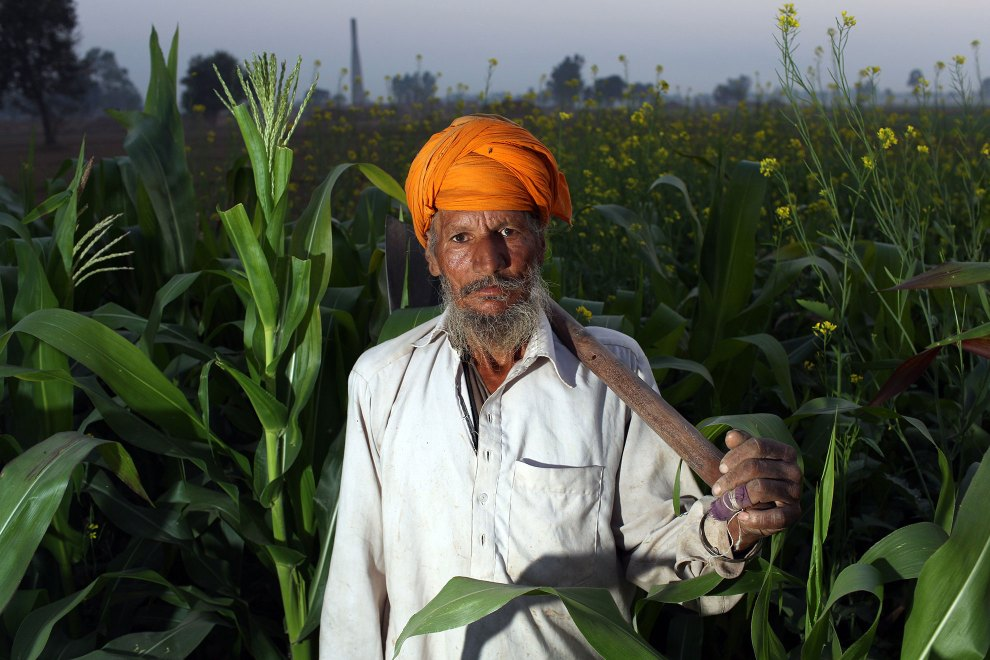 A farmer stands amongst crops in the Malwa region of Punjab. Increased use of pesticides and insecticides has helped increase crop yields however it has also led to sever health issues in local communities.