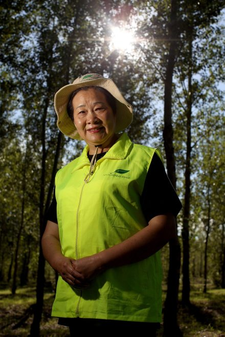 Yi Jiefang stands in one of the first forests she planted in the deserts of the Kunlun Qi area of Inner Mongolia, in northern China. She is the founder of Chinese NGO 'Greenlife' which plants trees in Inner Mongolia in an effort to combat increasing desertification in the north of the country.