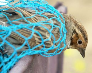 Uncaged: saving China's songbirds from the poachers' nets [Film]