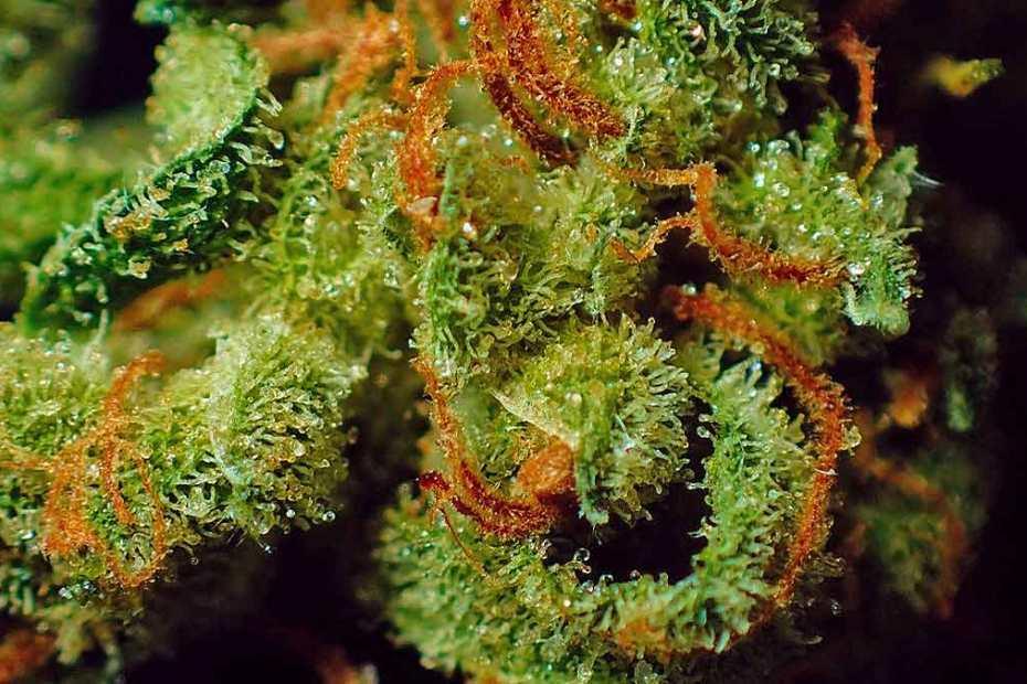 identity-marijuana-1200