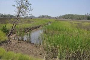 Low Marsh at Wild Acres
