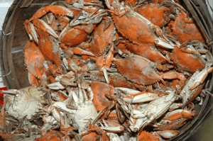 Famous Chesapeake Bay Blue Crabs, steamed and ready to eat!