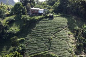 Hillside Farms of Trinidad