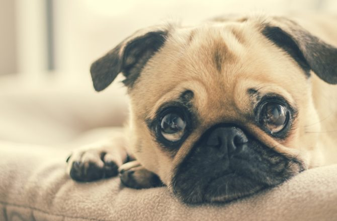 10 ways dogs can make you happy on Miserable Mondays