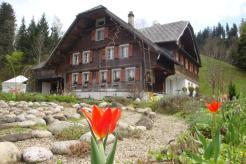 Haus Galleli mit Tulpe