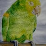 gulgrøn papegøje
