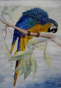 Dyr og fugle
