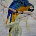 blå papegøje