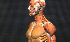 Human Anatomy Project