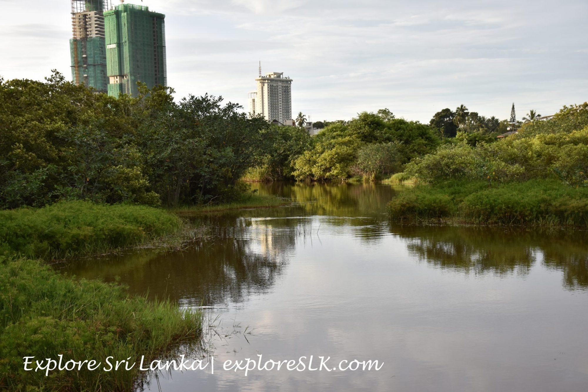A marshy pond