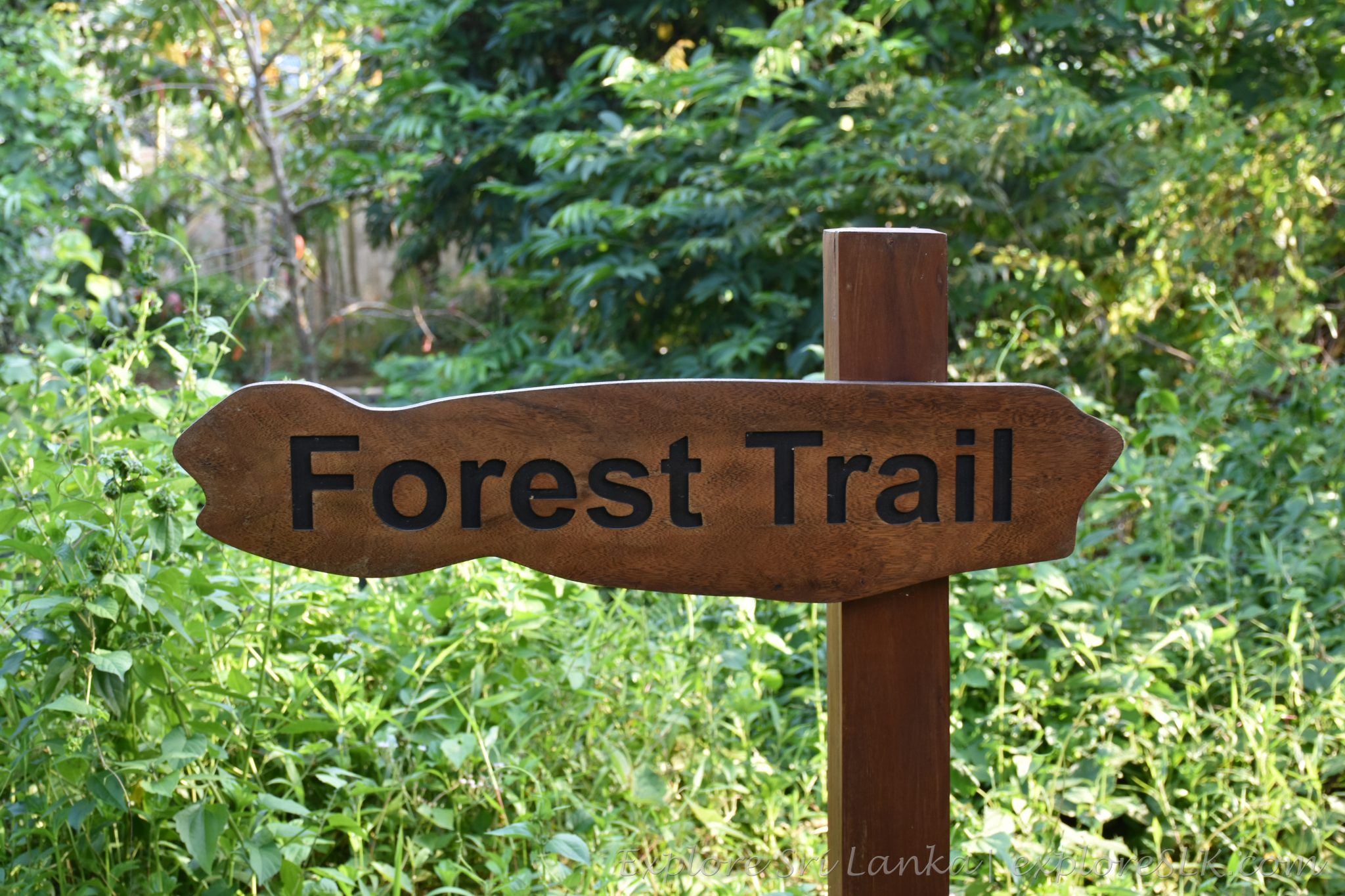 forest trail - sign board