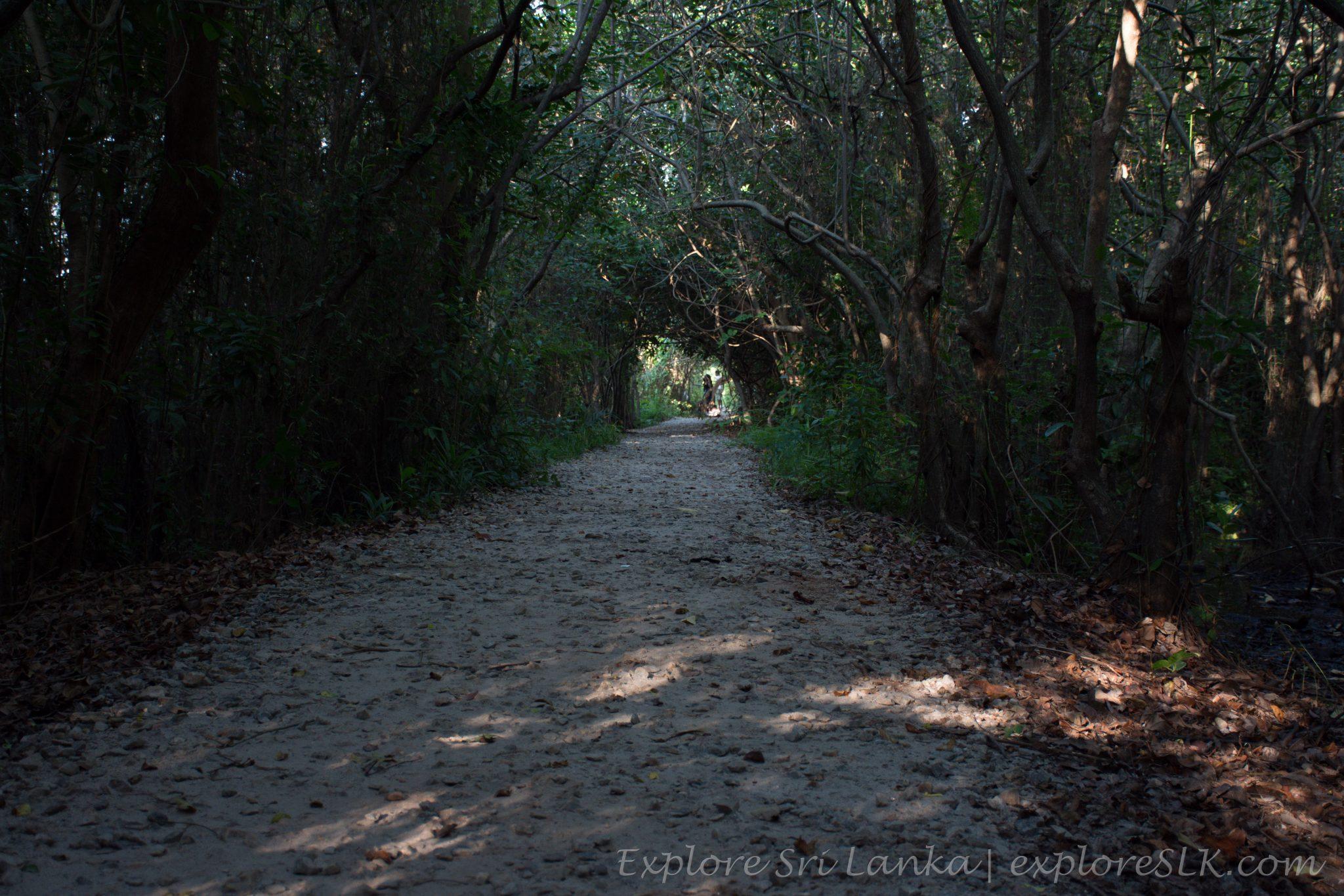 dark footpath