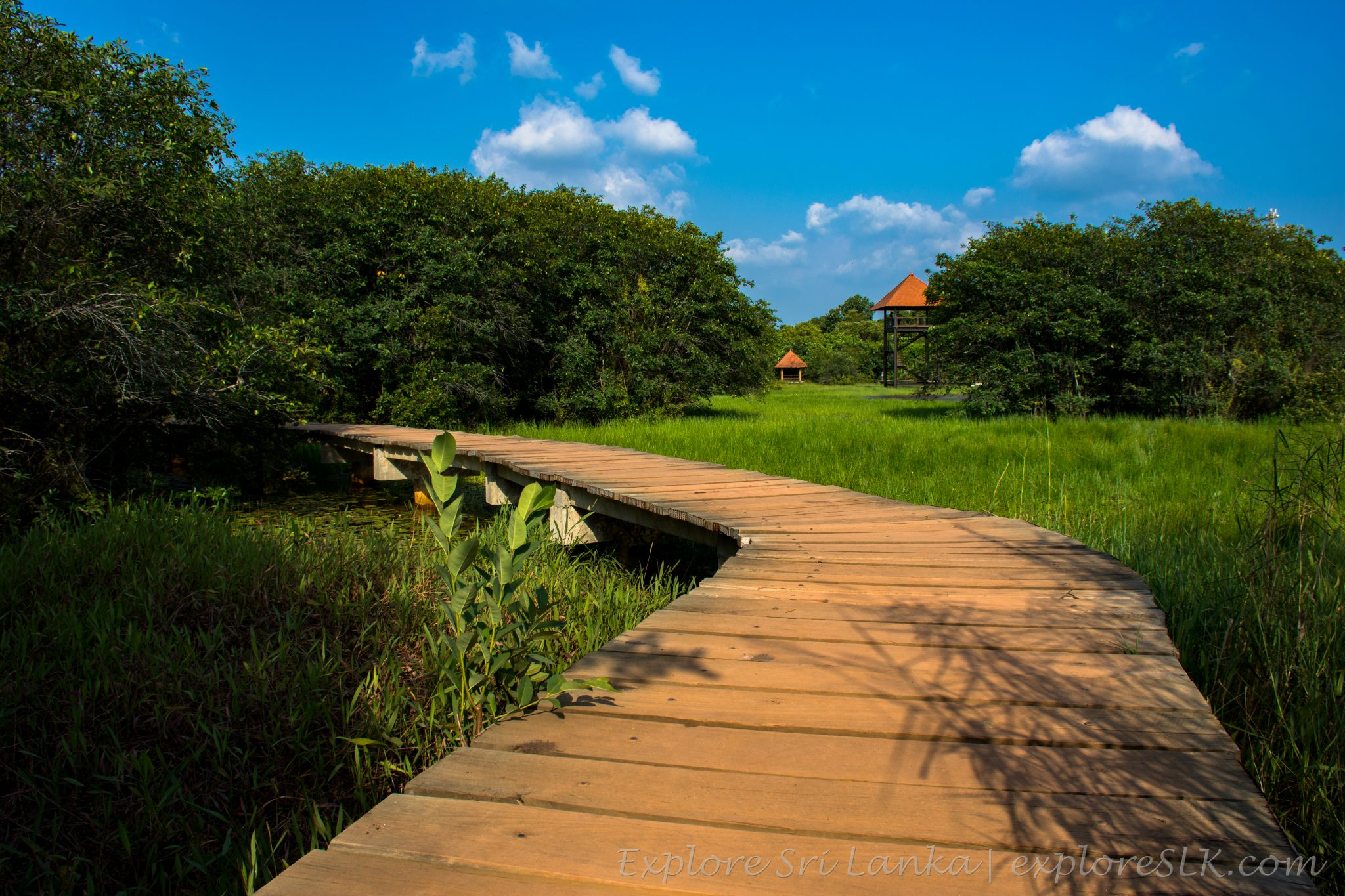 Footpaths in Beddagana Wetland Park