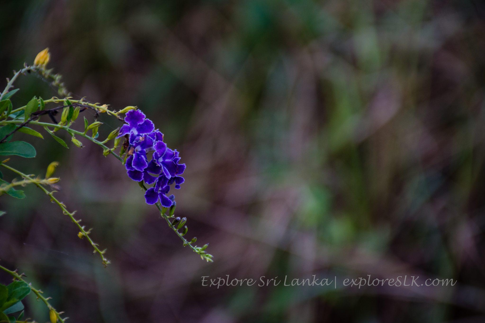amazing flower macro