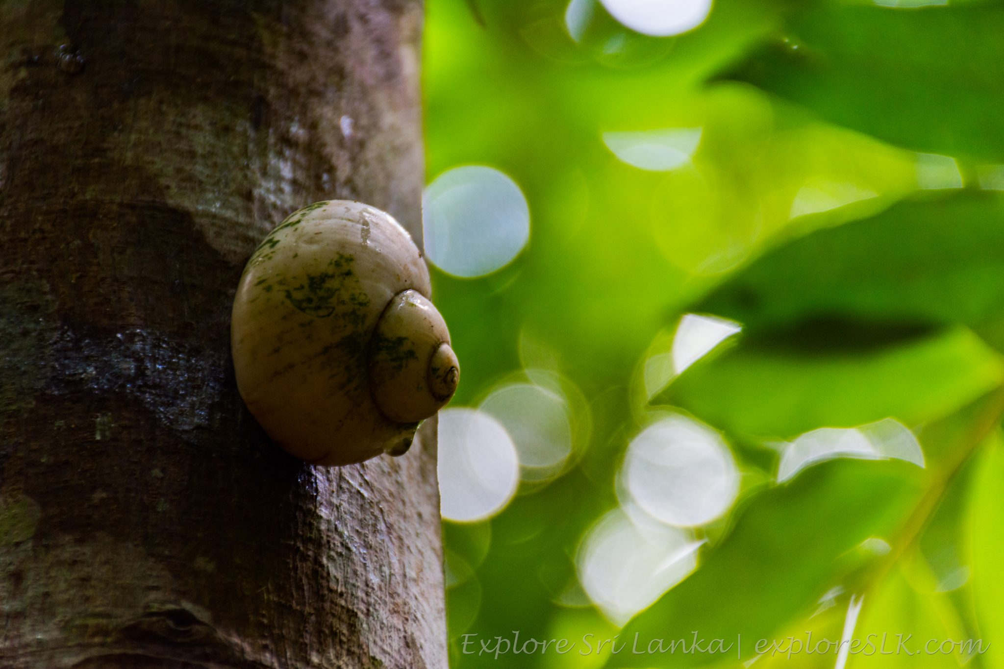 snail on tree