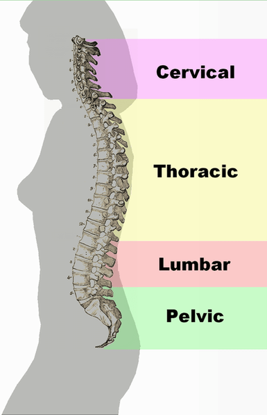 Neutral Spine