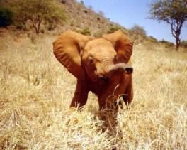 Junger Elefant in der Wildnis