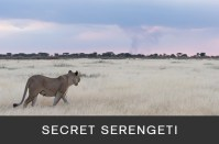 Secret Serengeti
