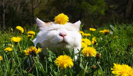 Cat enjoying spring sunshine
