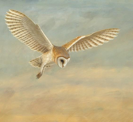 https://www.robertefuller.com/acatalog/Barn-Owl-a-hunting-1141.html#SID=23