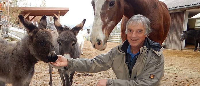 Newsletter                                                     Pferde