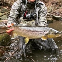 Big brown trout little Juniata Pennsylvania