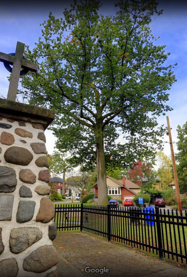 Our first Heritage Tree, Big Red, is located near the cenotaph at Long Branch Avenue and Park Road