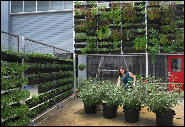 Angela Hirst of Wandering Cooks tends the garden at her Brisbane food incubator
