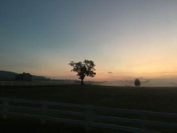 Morning mist. Love it.