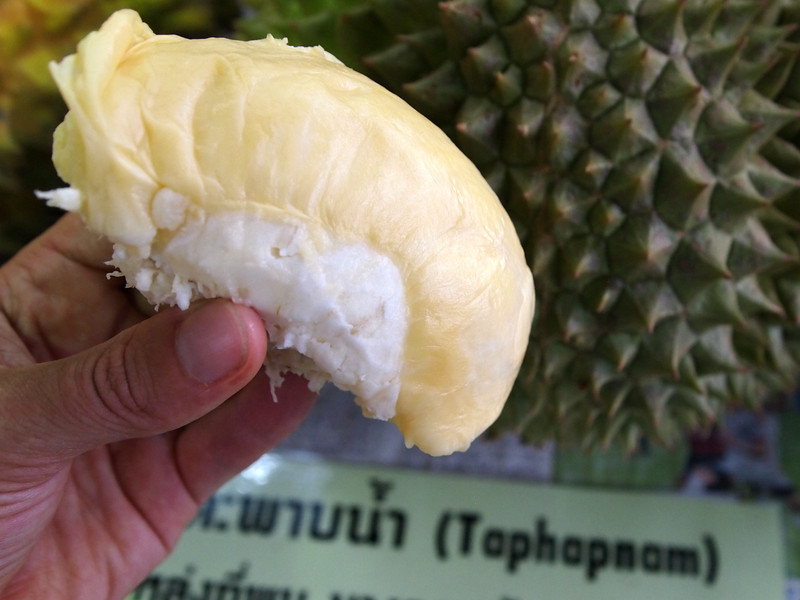 Updated Guide to 234 Thailand Durian Varieties -