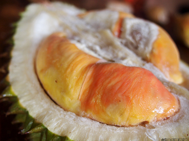 Rainbow durian pelangi Java