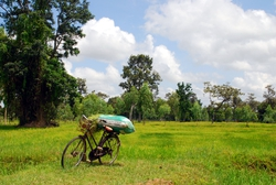 Bicycle next to a rice field