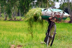 Typical Thai Bicycle