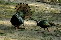 08_turkeys.jpg