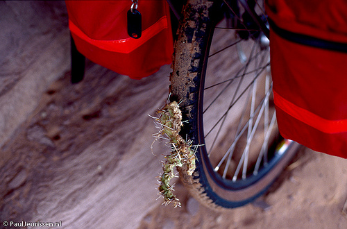 bicycle_meets_cactus.jpg