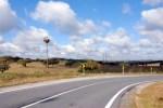 Storks nesting beside the road