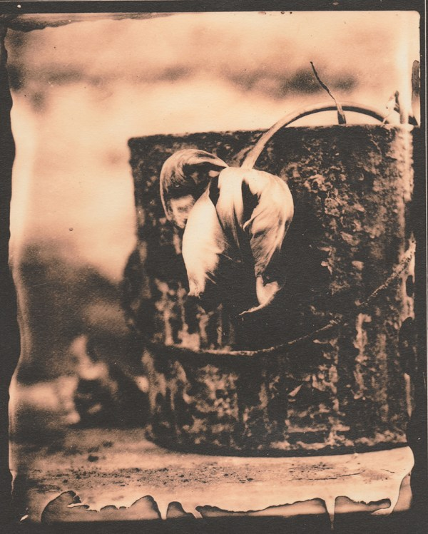"""""""Rusty"""" © Sarah Lycksten. Approx. 4x5"""" handcrafted alternative process photograph (silver emulsion lith print from glass wet plate negative on vintage Leonar paper). Signed original print offered by GALLERY5X7 at $250."""