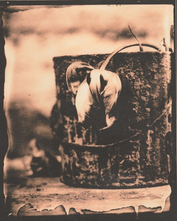 """Rusty"" © Sarah Lycksten. Approx. 4x5"" handcrafted alternative process photograph (silver emulsion lith print from glass wet plate negative on vintage Leonar paper). Signed original print offered by GALLERY5X7 at $250."