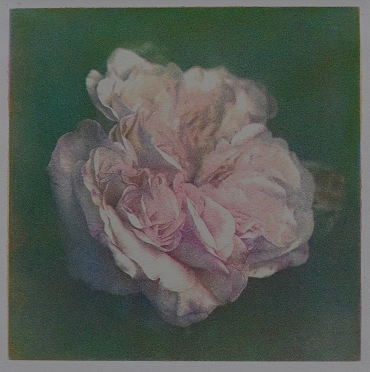 """Rose"" © Alan Glover. Approx 7x7"" handcrafted gum bichromate print from 4 negatives using watercolour pigments on Hahnemuhle Platinum Rag paper. GALLERY5X7 offers this original print, signed on the mount (mount size 12.5x12.5""), at $250."