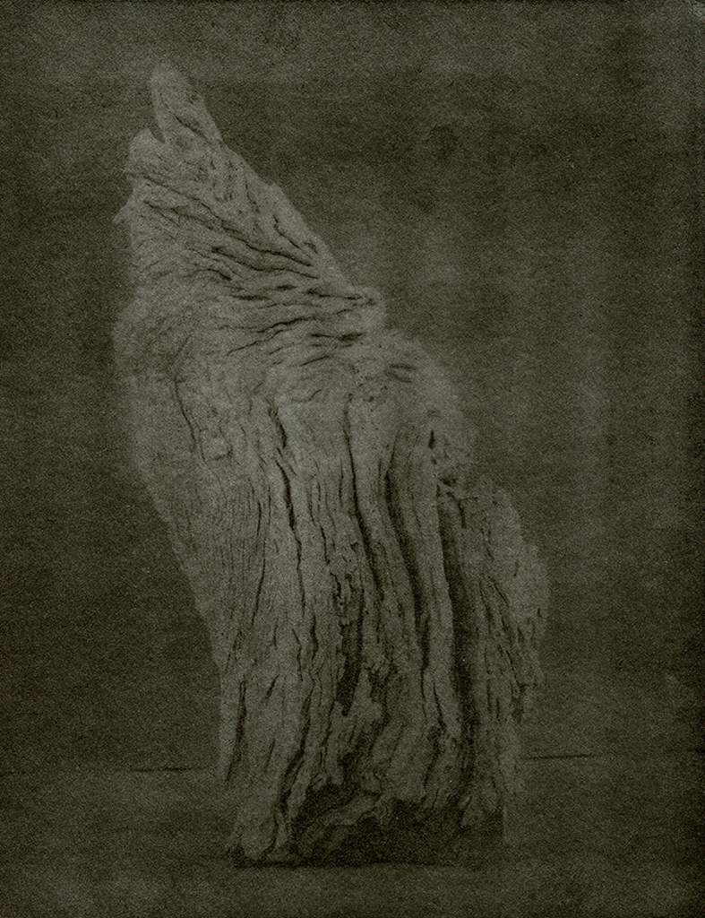 """""""Angels Wing"""" © Mat Hughes. Approx. 7x9.5"""" (18x24cm) handcrafted warm-toned silver gelatin tree bark still-life study from scanned large format 4x5 negative. Printed on fibre paper and bonded on 16x16"""" (40.5x40.5cm) Forex foamboard ready for framing. Edition of 3 unique signed prints. Offered by GALLERY5X7 at $250."""
