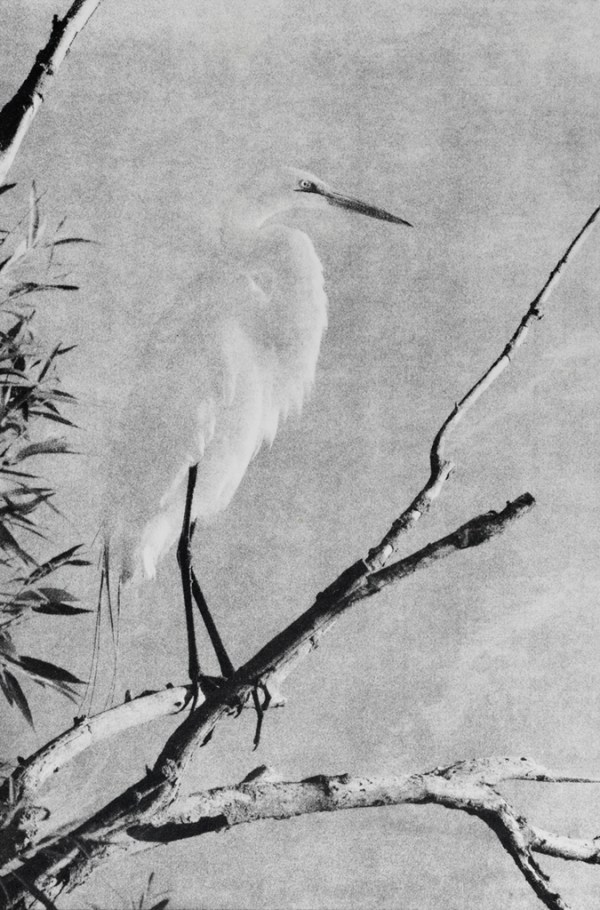 """""""Egret"""" © Andy Kraushaar. Approx. 8x12"""" (20.3x30.5cm) handcrafted alternative process photograph (gum bichromate) printed on Hahnemuhle Platinum Rag. GALLERY5X7 offers this signed, original print at $250."""