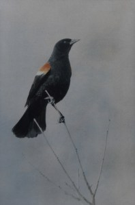 """""""Red-winged Blackbird"""" © Andy Kraushaar. Approx. 8x12"""" (20.3x30.5cm) handcrafted alternative process photograph (tri-color+black gum bichromate over cyanotype) printed on Hahnemuhle Platinum Rag. GALLERY5X7 offers this signed, original print at $500."""