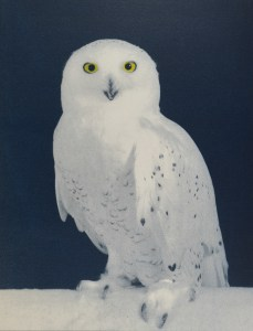 """""""Snowy Owl"""" © Andy Kraushaar. Approx. 8x12"""" (20.3x30.5cm) handcrafted alternative process photograph (hand-tinted cyanotype) printed on Hahnemuhle Platinum Rag. GALLERY5X7 offers this signed, original print at $250."""