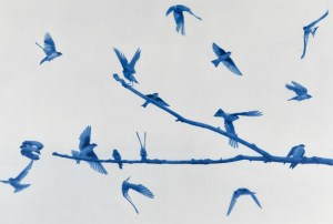 """""""Swallows"""" © Andy Kraushaar. Approx. 8x12"""" (20.3x30.5cm) handcrafted alternative process photograph (cyanotype) printed on Hahnemuhle Platinum Rag. GALLERY5X7 offers this signed, original print at $250."""
