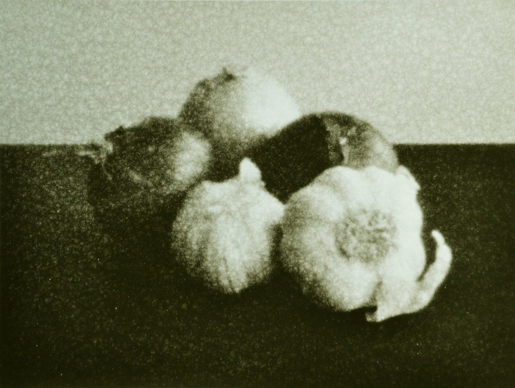 """""""Garlic and Onions"""" © Barry Mayfield. Approx. 8X10.5"""" (20X27cm) handcrafted alternative process photograph (silver gelatin lith print). GALLERY5X7 offers this signed, original print at $250."""