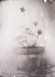 """La lumière des fleurs 1"" © Xavier Vanlaere. Approx. 5.3x7.1"" (13.5x18cm) handcrated alternative process photograph (silver gelatin print) developed in darkroom with a paintbrush on multigrafe FB photographic paper."