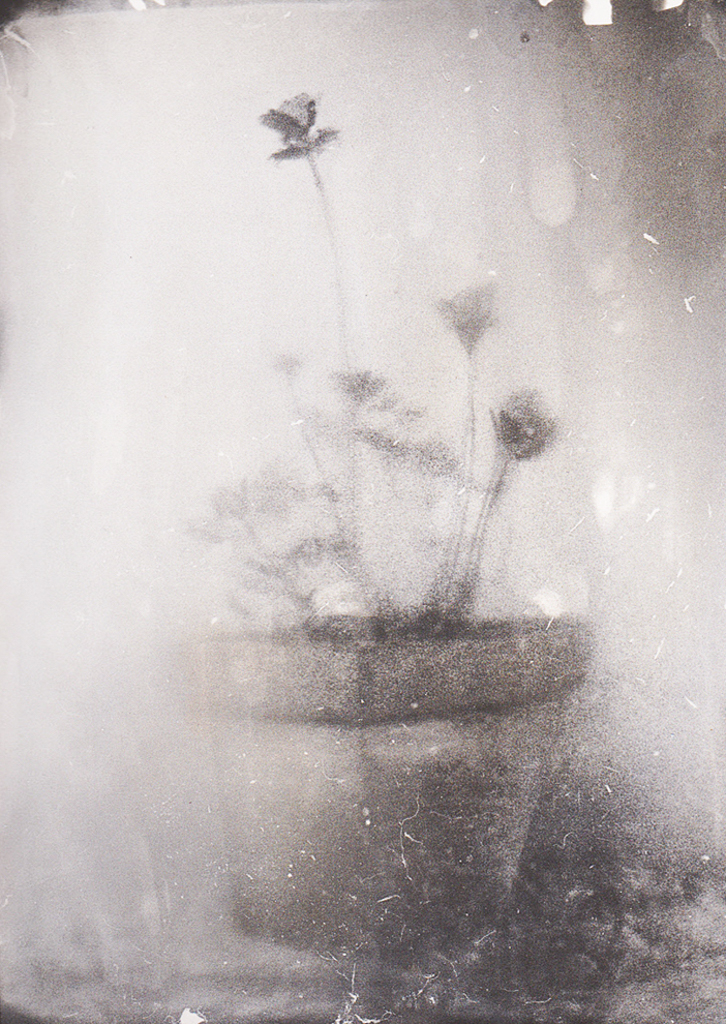 """""""La lumière des fleurs 1"""" © Xavier Vanlaere. Approx. 5.3x7.1"""" (13.5x18cm) handcrated alternative process photograph (silver gelatin print) developed in darkroom with a paintbrush on multigrafe FB photographic paper. GALLERY5X7 offers this signed, original print at $250."""