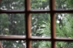 田中さん。丸窓の外枠をあえて省き、格子から見える外の風景に集中しました。写真中央に雨粒のついた松の葉先を捉えたのもポイントに。